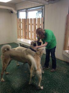 doggydaycare1
